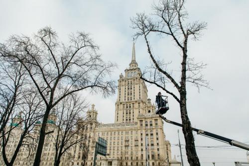 4.03.2020_Обрезка деревьев Кутузовский проспект_026