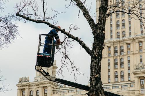 4.03.2020_Обрезка деревьев Кутузовский проспект_028