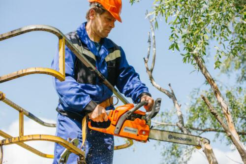 Обрезка деревьев